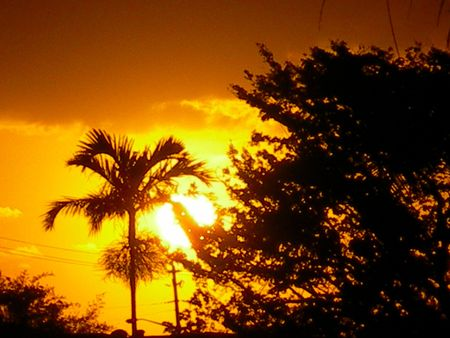 Sunset behind trees 版權商用圖片