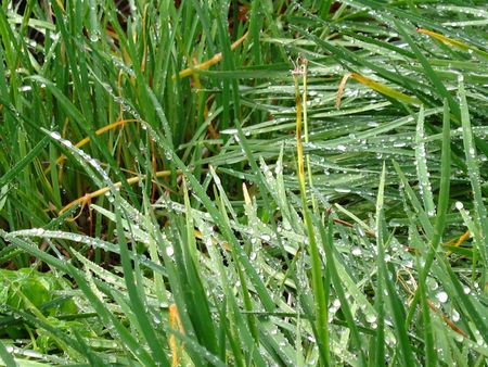 dew on the grass