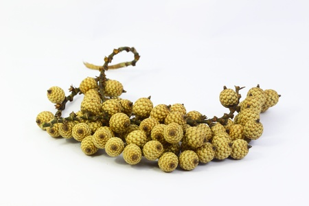 Rattan seed with white background