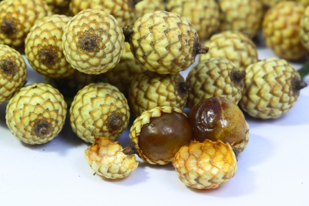Close up Rattan seed