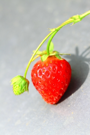Strawberries raw and ripe in the garden photo
