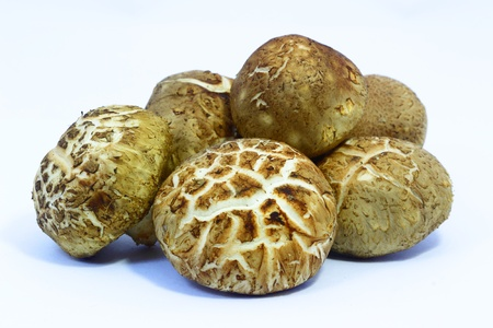 Shiitake mushrooms with white background photo