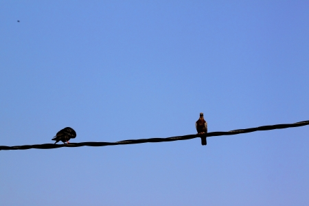 Birds sit on wire photo