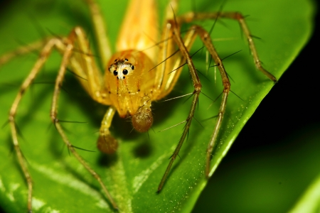 Spider standing on the green leaf