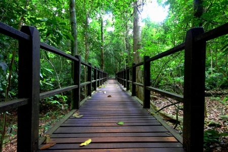 Wooden bridge in a forest photo
