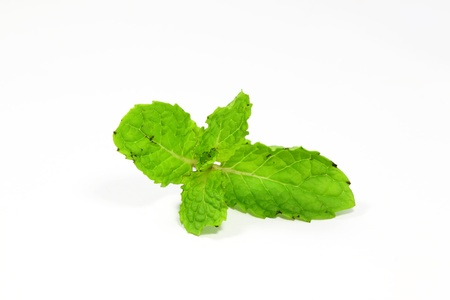 Fresh green mint leaves with white background