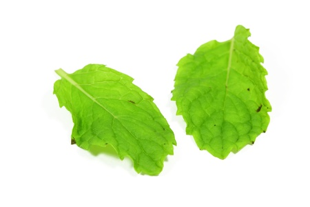 Fresh green mint leaves with white background photo