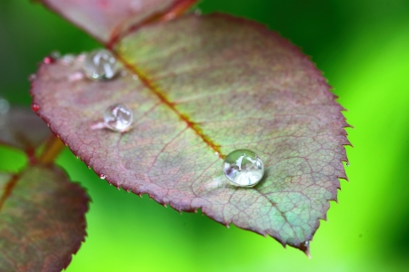 Water drop on leaves photo