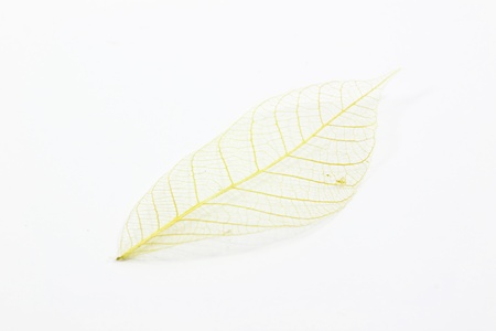 pressed: Structure of the leaf with white background Stock Photo