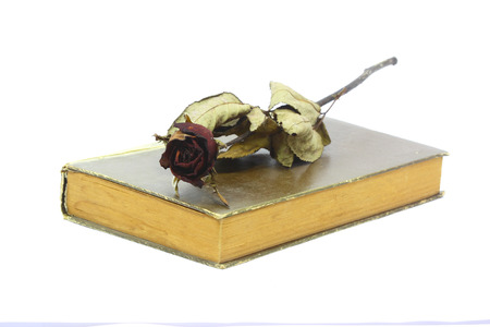 Dry roses put on the old book photo
