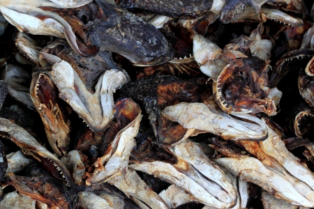 Snakehead dried fish head photo