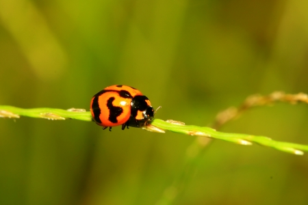The ladybug on grass photo