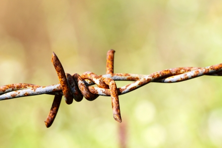 Barbed wire photo