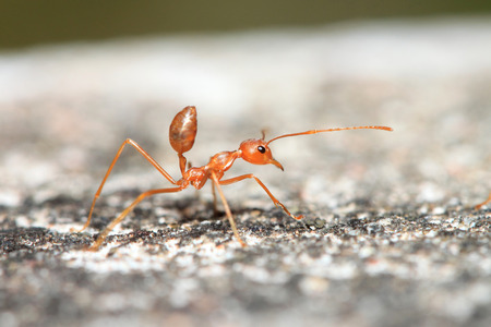 close up ant Stock Photo