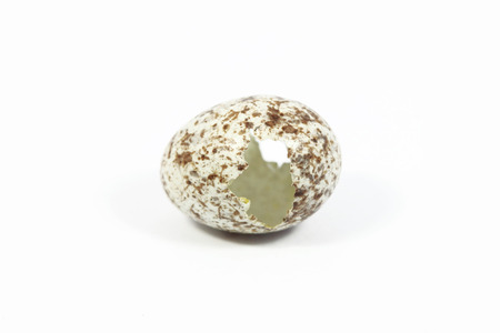 One open eggs of bird with white background photo