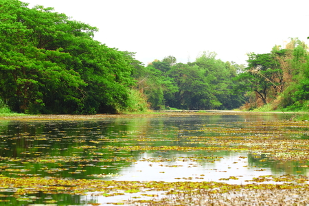 The river nature in Thailand photo