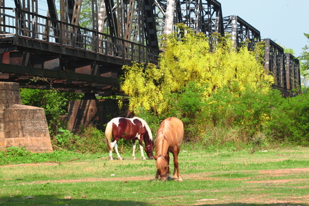 Horses taking rest on green meadow photo