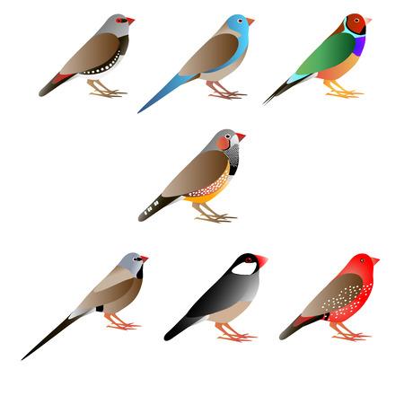 Zeven amadines Vector Illustratie