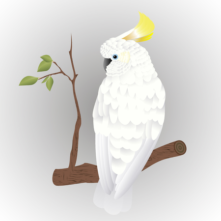 Yellow crested cockatoo ((Cacatua sulphurea)species with white plumage on a branch, isolated on gray background Illustration