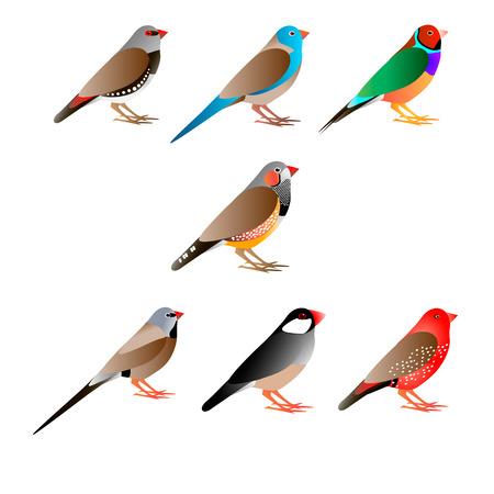 Zeven gekleurde vogels, witte achtergrond