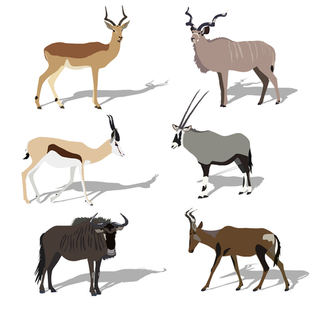 Five african antelope, set, shadows, each picture is located on a separate layer. Flat design Illustration