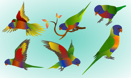 set of rainbow lorikeets on a light blue background, isolated, each object is located on a separate layer