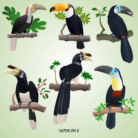 A set of realistic toucans and hornbills on branches, isolated, light green background Ilustrace