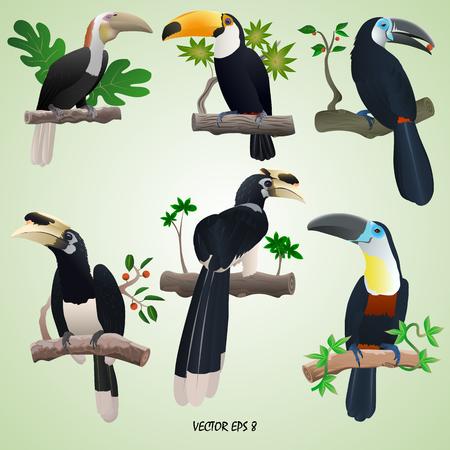 Ein Satz realistische Tukane und Hornbills auf Niederlassungen, lokalisierter, hellgrüner Hintergrund