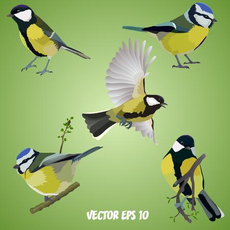 Conjunto de aves realistas en ramas y ilustración voladora.