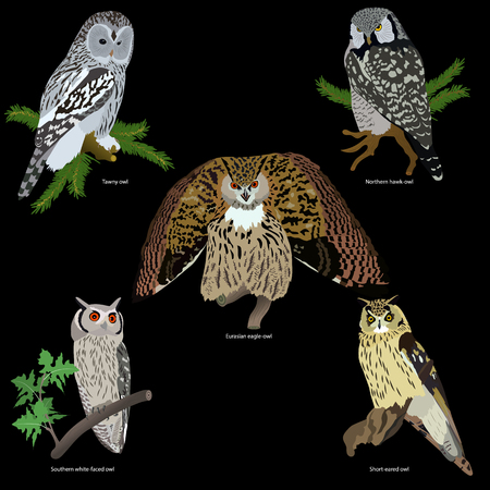 set of realistic owls on branches on black background, isolated Illustration