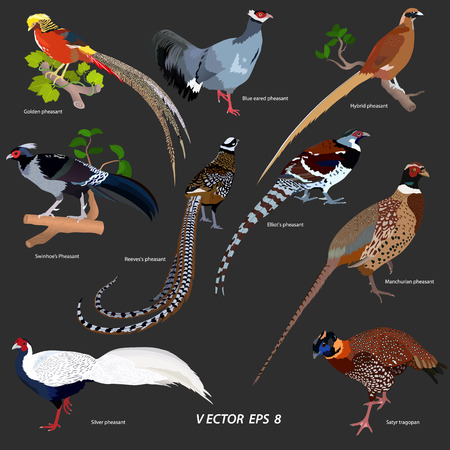 collection of different kinds of pheasants on a dark gray background, isolated Vector illustration.
