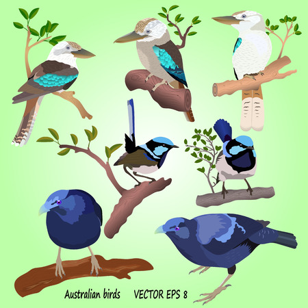 A set of realistic Australian birds on a green background, isolated. Kookabara, Satin bowerbird and Superb fairywren Illustration