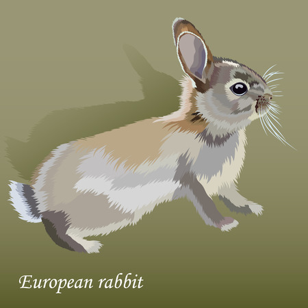Cute realistic little european rabbit,  isolated, on a green background, vector illustration