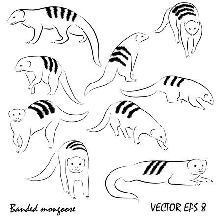 Ilustración de dibujo gráfico con divertido juego de mangosta, aislado, sin fondo