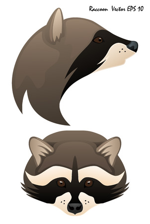 Two illustrated vector portraits of raccoons, full face and profile, close-up. No background, isolated