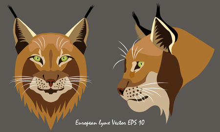 Two illustrated vector portraits of lynx, full face and profile, close-up, gray background, isolated