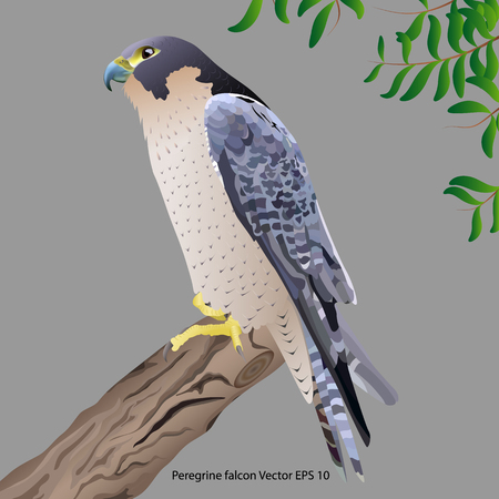 realistic peregrine falcon sitting on a branch,  isolated on gray background. Vector illustration Stock Illustratie