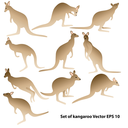 Set of kangaroo silhouettes in various postures. VEctor illustration