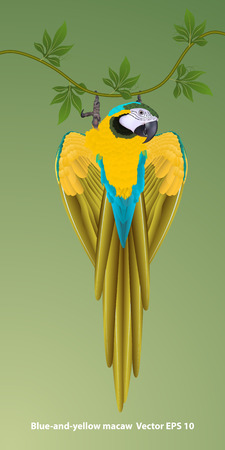 Drawing of realistic blue-and-yellow macaw hanging on a liana, isolated. Vector illustration
