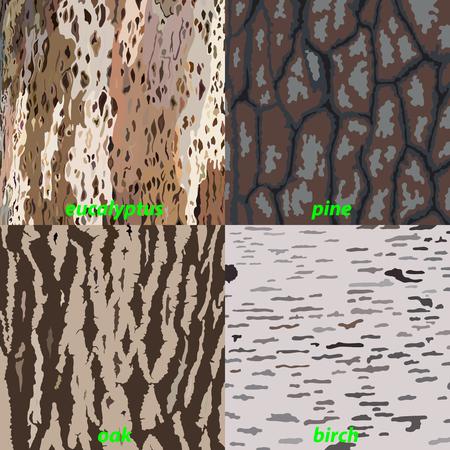 Set of tree bark - eucalyptus, oak, pine, birch for background, isolated. Vector illustration