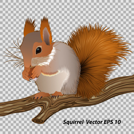 Figure squirrel with a nut, sitting on a branch close-up, vector illustration