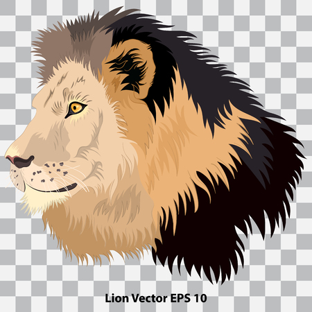 Realistic head of a lion in profile on a transparent background, close-up. Vector illustration Ilustração