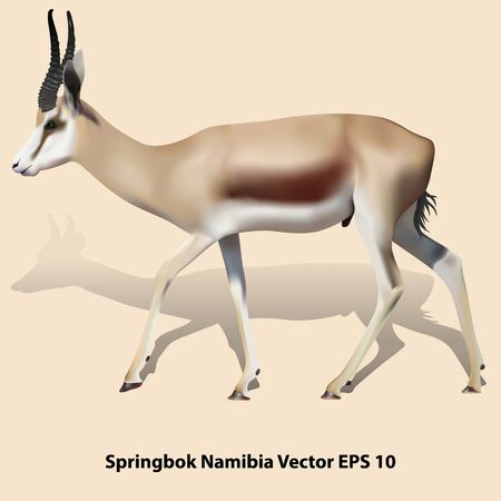 Drawing realistic springbok with shadow on a beige background, isolated. Vector illustration EPS 10 向量圖像