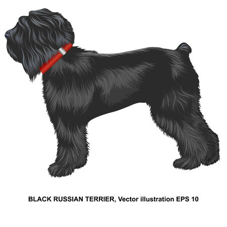 Realistic russian black terrier in profile, closeup, full size, isolated. Stock Illustratie