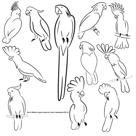 A set of different types of parrots, sketch, outline, isolated. Vector illustration EPS 10