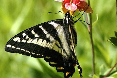 nectar: Spring Nectar