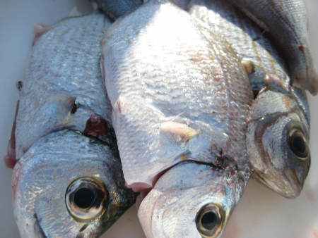Fish Stock fotó