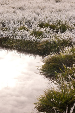 white frost on green grass next to water