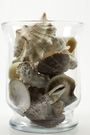 clear glass jar or vase filled with sea shells