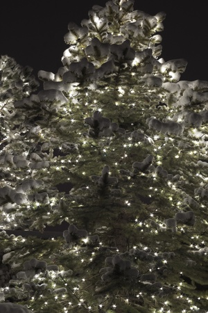 glowing pine tree with lights and snow against a dark background